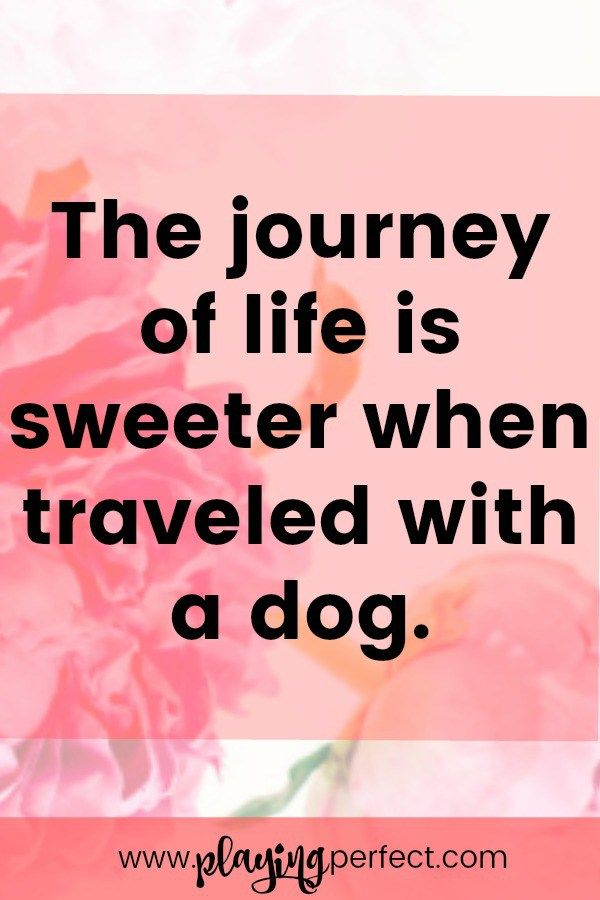 Everything's better with dogs including travel! If you are excited about sharing your travels with your dog, you might also be happy to travel along with some quotes about dogs! Happy dog quotes are the best not just for travelers but for dog parents too! These are some of the best dog quotes ever! FREE printable! | playingperfect.com