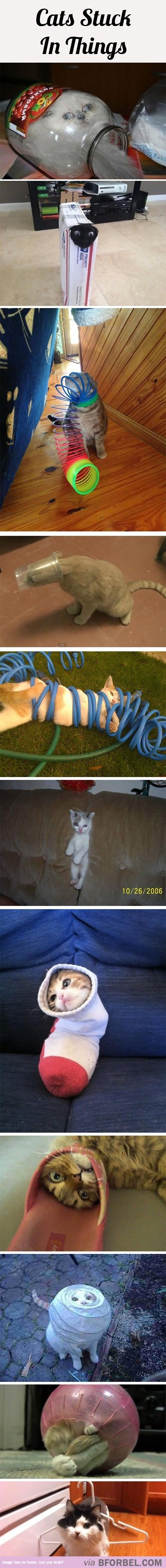 11 Cats Stuck In Things…