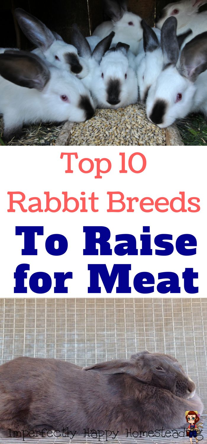 Top 10 Rabbit Breeds to Raise for Meat on your homestead or backyard farm.