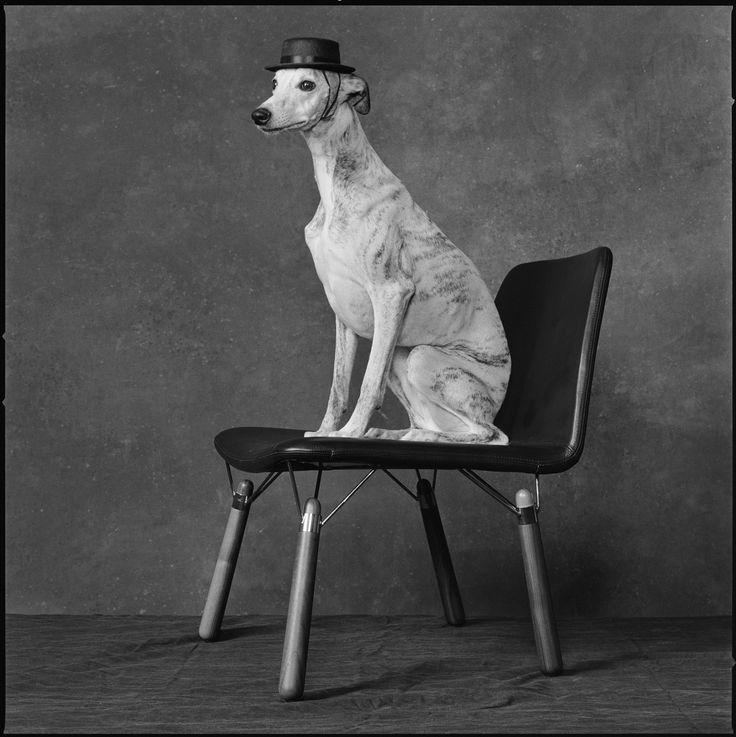 На создание стульев и столов  NEST дизайнера Александра Лервика  вдохновили классические модели стульев и столов 60-х годов с ножками из натурального дерева, в общем облике которых автор искал решение проблемы крепления основания к сиденью или столешнице. Название NEST («Гнездо») возникло после осмысления того, что металлическая структура стула напоминает птичье гнездо.
