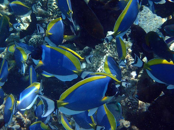 poisson chirurgien appareil photo étanche