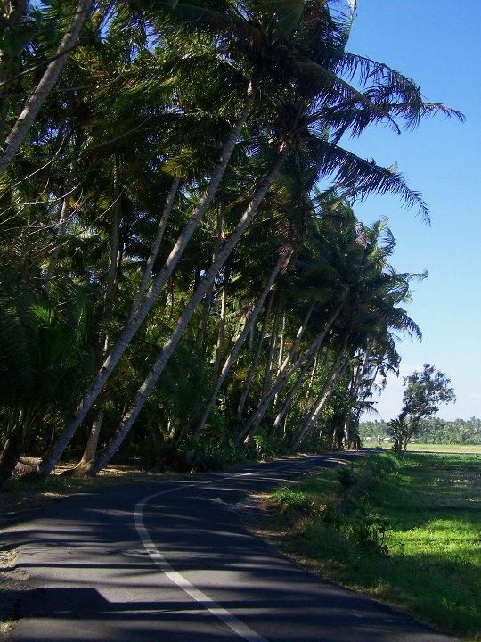 Road to Kwaru beach, bantul, Yogyakarta, Indonesia