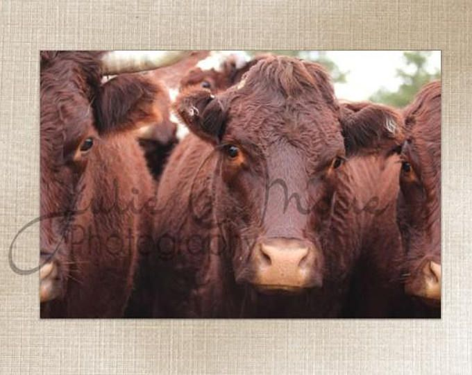 Montana Western Cattle - Wall Art Decor - Fine Art Photography Canvas Gallery Wrap - Country Cows Gold Nature Salers Rustic Nature