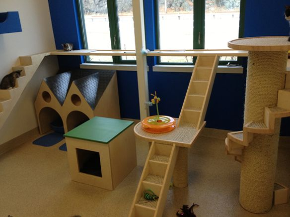beautiful community cat room at the northeast animal shelter in salem ma - Cat Room Design Ideas