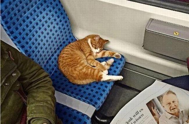 Metroda İki Koltuğu Kapıp Temiz Bir Uyku Çeken Sevimli Kedinin İç Isıtan Hikayesi Sanatlı Bi Blog 4