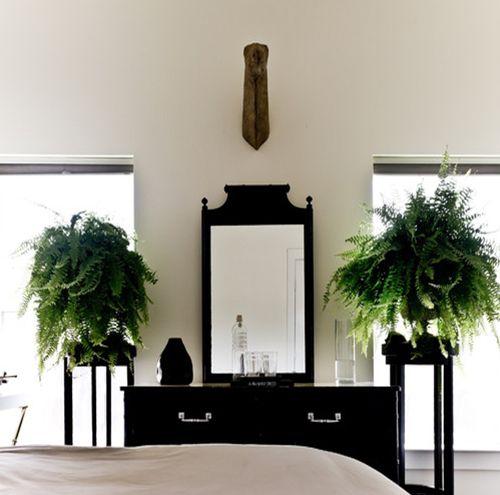 Indoor bedroom fern plants 500 495 tropical home 2 pinterest - Indoor plant for bedroom ...