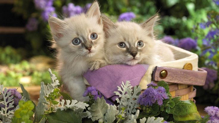 nice Cats Pets wallpaper