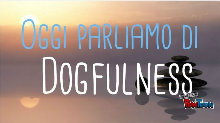 Un breve #video scherzoso (ma non troppo) per vedere i paralleli tra #Mindfulness e #Dogfulness, l'innata #consapevolezza dei #cani nel vivere il momento presente. Forse possiamo imparare qualcosa da loro sul nostro #benessere? Buona visione! #psicologia #cinofilia #cani #Rovigo