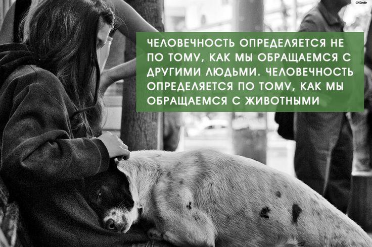 Картинки по запросу цитаты о животных