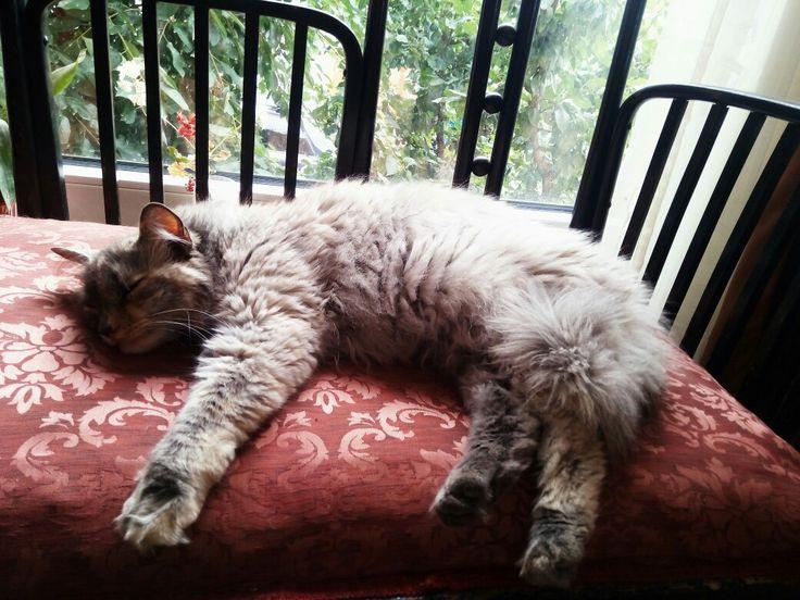 Cat life. Luxury siesta