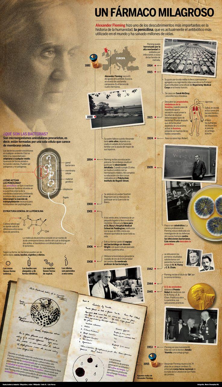 Alexander Fleming #infografia #infographic