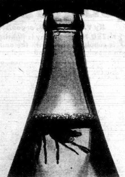 Spider in beer quart