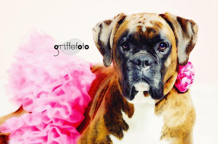 Photographie d'animaux par Griffe Photo