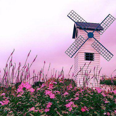 Pink Windmill