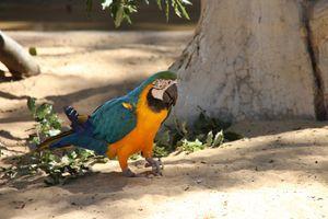 La Palmyre Zoo - Ara