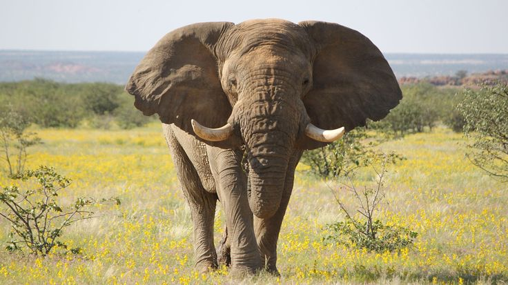 Freiwilligenarbeit Namibia & Arbeiten mit Elefanten | TravelWorks