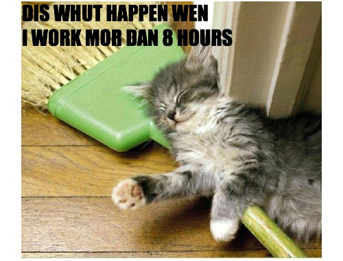 #ClassWarKitteh needs teh 8 hour day.: Kitty Cats, Hour Work, Funny Cats, Spectacular Animals, Animal Humour, Funnies, Funny Kitties