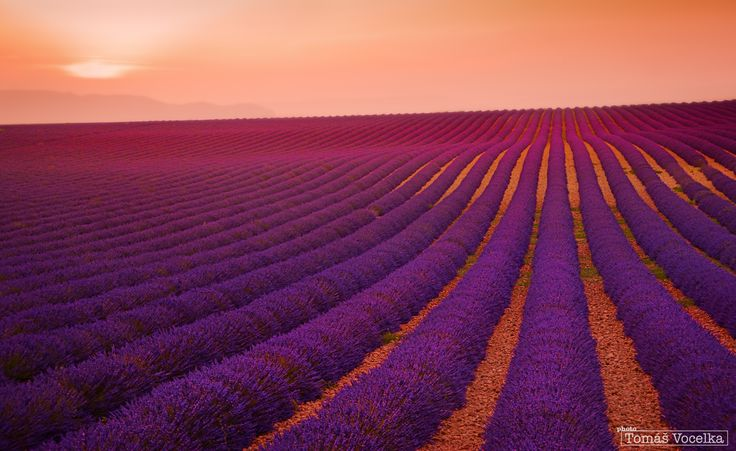 Lavender field at sunset, Valensole (Provence, France). Reedited version of one of my previous posts. (I deleted the older one from my portfolio on the 500px).  WEB: Tom Vocelka Photography