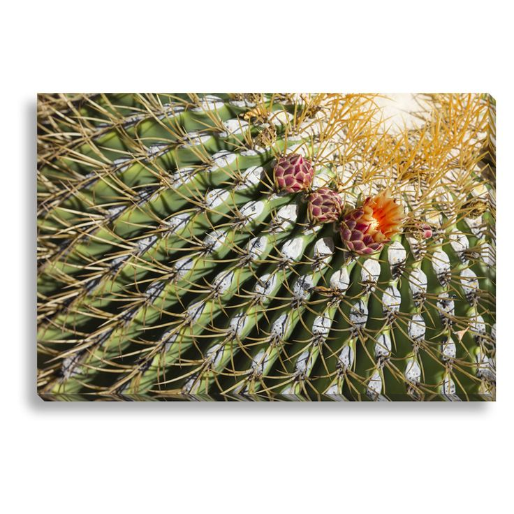 New Era Southwestern Cactus Blossom Indoor/Outdoor Canvas Print - NE73314