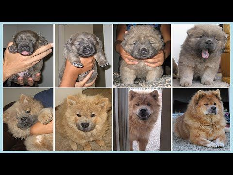 #dogs #dogsgrowingup #beforeandafterphotos #beforeafter #dogvideos #dog #videosaboutdogs