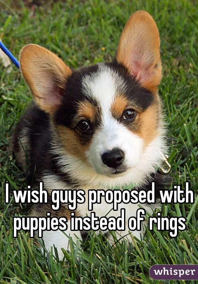 I wish guys proposed with puppies instead of rings