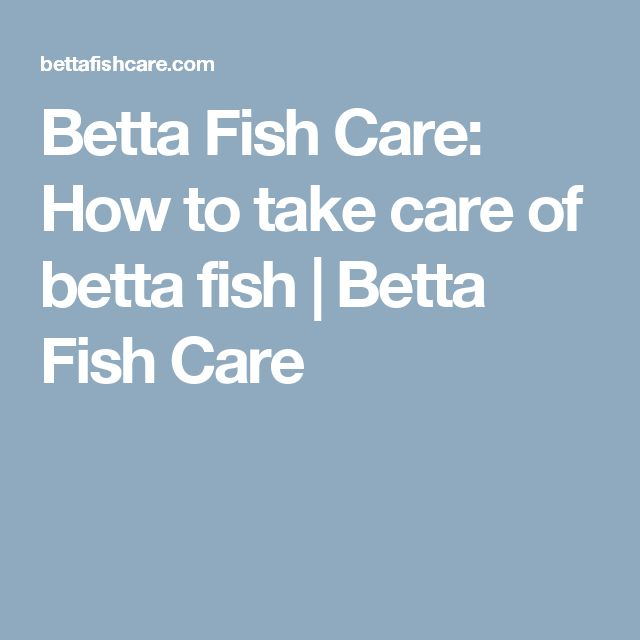 42 best betta fish care images on pinterest betta fish for How to take care of beta fish