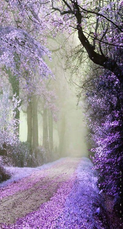 janetmillslove:Purple Cherry Road moment love