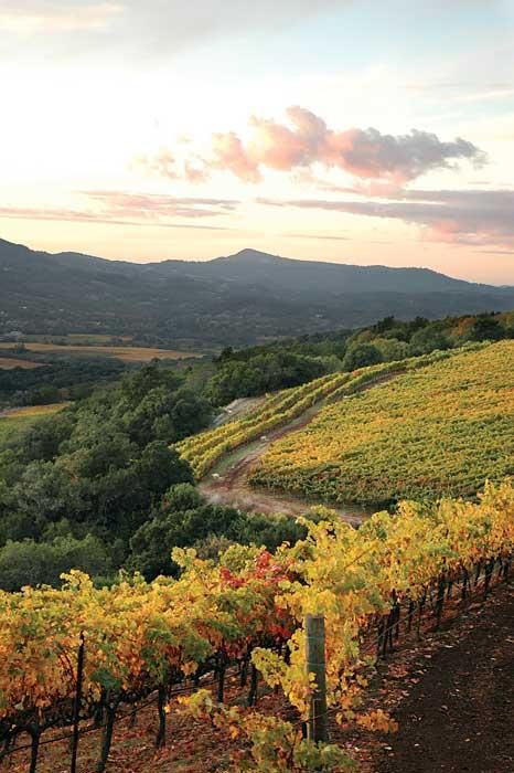 Sunset in Sonoma. Click here to see Sonoma County's 10 Best Wineries & Vineyards