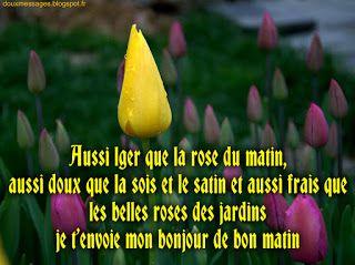 images bonjour d'amour