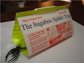 Spider Traps – The Best Way to Catch and Kill Spiders - http://wolfspider.org/spider-traps/