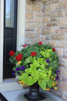 red geranium, purple wave petunia, yellow million bells, sweet potato vine