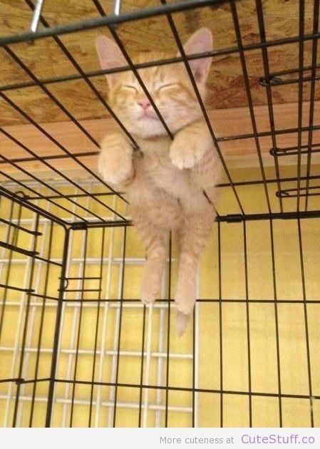 Kitten Chillen