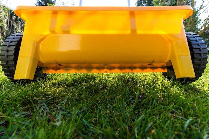 reseeding lawn