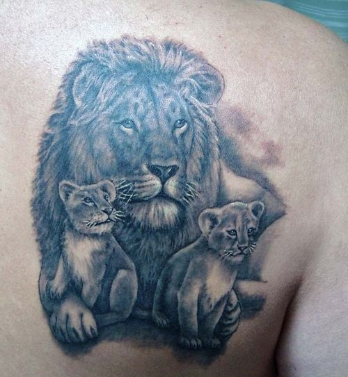 Grey lion and two lion babies on the shoulder blade