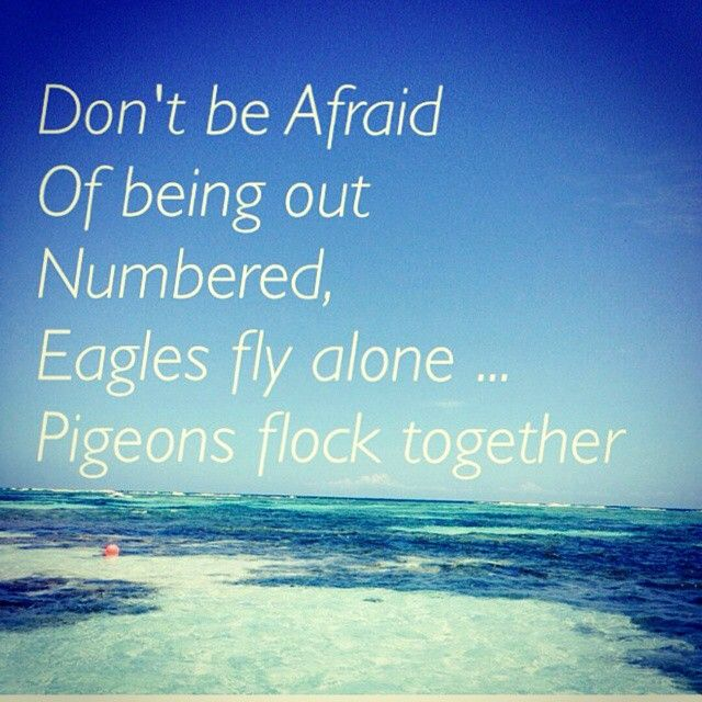 Dont be afraid of being outnumbered, Eagles fly alone... Pigeons flock t...