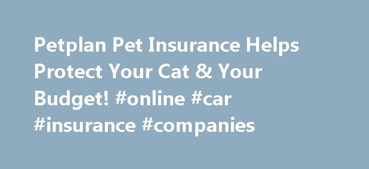 Petplan Pet Insurance Helps Protect Your Cat & Your Budget! #online #car #insurance #companies http://insurance.remmont.com/petplan-pet-insurance-helps-protect-your-cat-your-budget-online-car-insurance-companies/  #cat insurance # cat Add a tenth life to your cat's nine with Petplan's flexible cat insurance! Are you prepared for health cat-astrophes? As a pet parent, you want the very best to keep your cat feeling fine. While cats spend about two-thirds of their lives sleeping (really!)…
