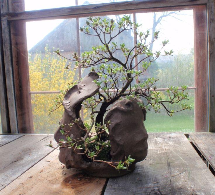 Spring in Nick Lenz's garden some wonderful bonsai trees here