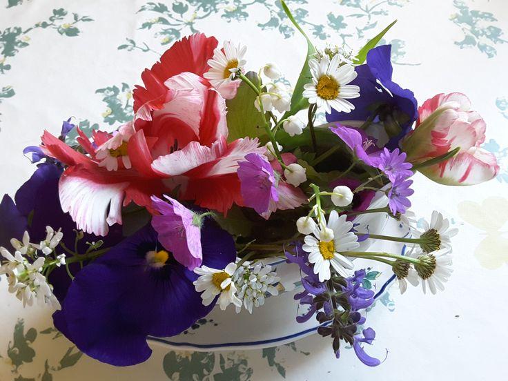 Encore quelques fleurs printanières !