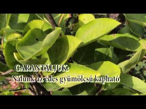 Mézalmácska® hamis? : Van édes és van keserű gyümölcsű