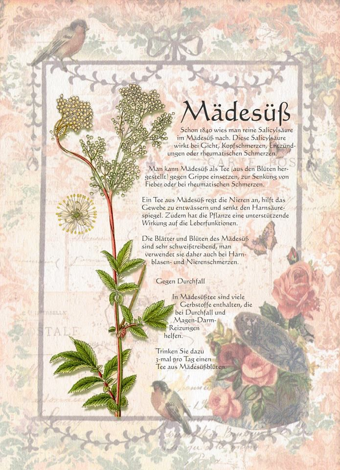 Mädesüß - besitzt sehr positive Energien. In der Vergangenheit sehr gerne für Liebeszauber verwendet worden.