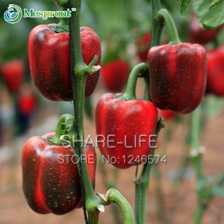 Červené papriky Seeds Red Pepper Organické zeleninových semen A Garden Patio květináči 100 PCS