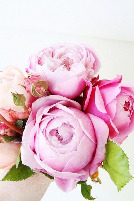 TOP 5 FENG SHUI FLOWERS FOR LOVE - Love - Relationships - Family - Marriage - Dating - Date Night - Psychic Readings - Soulmates - Love Readings - Feng Shui Your Home for Love w/ a Professional Feng Shui Consultation at the link.