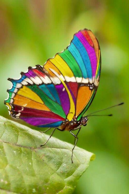 ¡Todo un arcoiris de colores en sus alas!  ¡La más bella de las bellas!.....