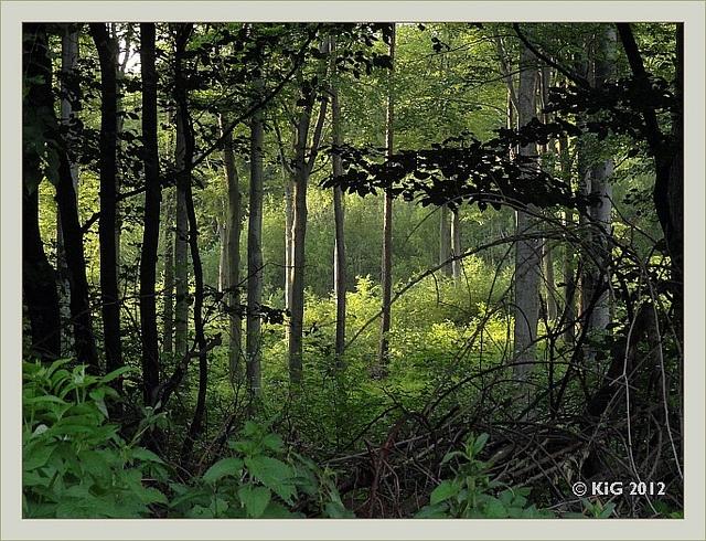 oedenburger wald bei Ritzing im Burgenland 2012-06 by Er.We, via Flickr