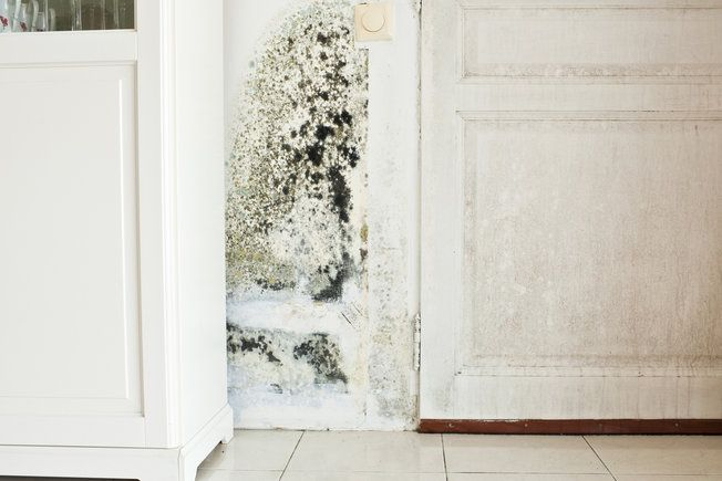 What to Consider While Getting Rid of Toxic Mold – The Mold Information Factory