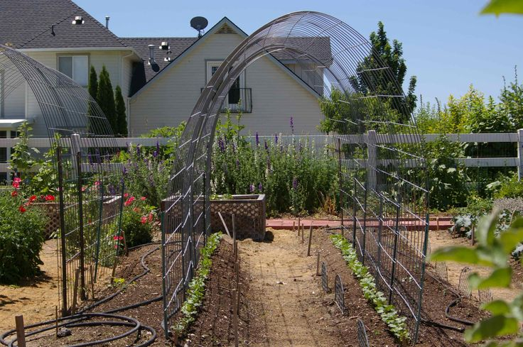 making a trellis for pumpkins | Simple Arched Trellis for Grapes or Pole Beans | Daily Improvisations