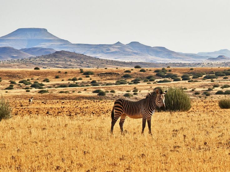 Everything You Thought You Knew About Safari Is Wrong - Condé Nast Traveler