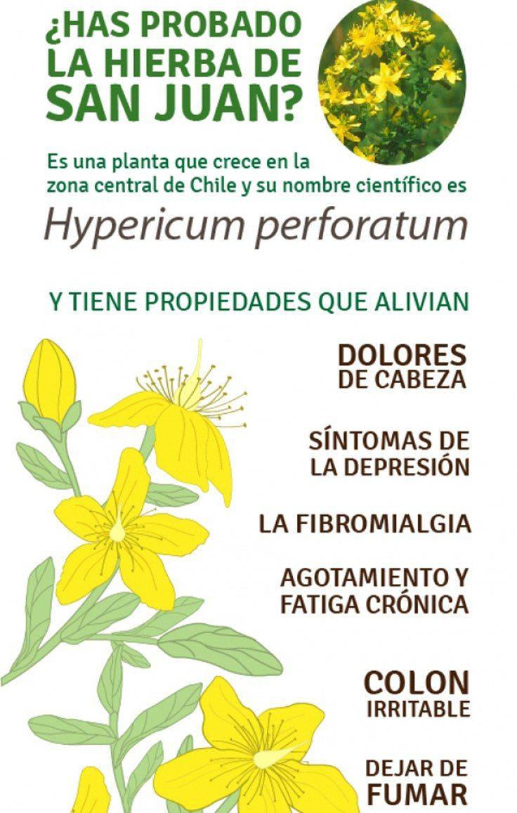 La hierba de San Juan o hipérico (Hypericum perforatum) es una planta de flores amarillas que contiene compuestos como lahiperforina y lahipericina, conocidos por ser potentesantidepresivos, pero tambien por sus propiedadesanti-virales, antibacterianas, antioxidantes y anti-inflamatorias. Por tanto, las propiedades de la Hierba de San Juan van mucho más allá del espectro físico de la persona …