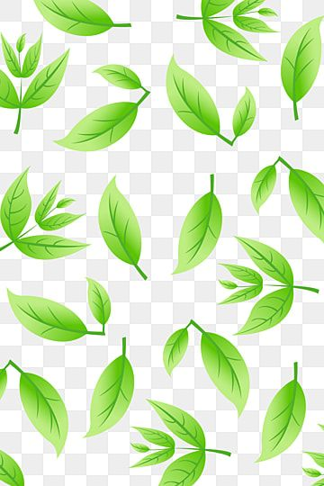 Green Tea Shading Green Green Tea Tea Png And Vector With Transparent Background For Free Download Green Tea Green Tea