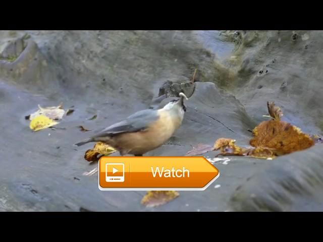 Entertainment Videos For Cats and Dogs To Watch Squirrel and Bird Fun  Entertainment Video For Cats and Dogs To Watch Squirrel and Bird Sounds For Your Cat and Dog Pelcula para Gatos Film Pour Les Chats Film fr Katzen  on Pet Lovers